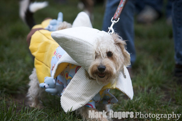 Dogtoberfest: Pups in Costume