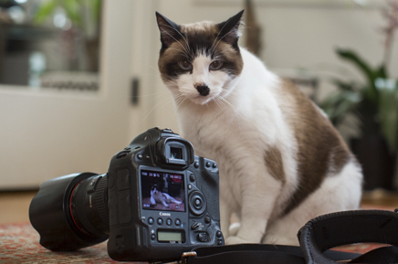 cat next to camera