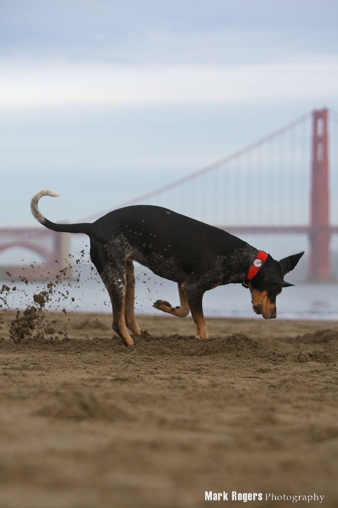 The Golden Gate Bridge Has Gone to the Dogs, Cats and Geckos