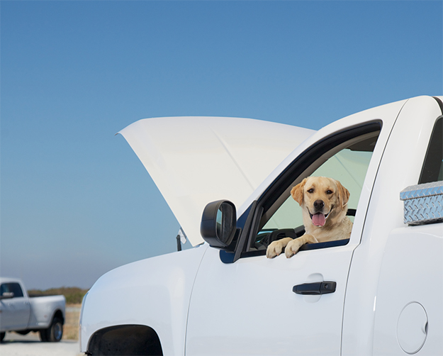 Dog sitting in pick up truck