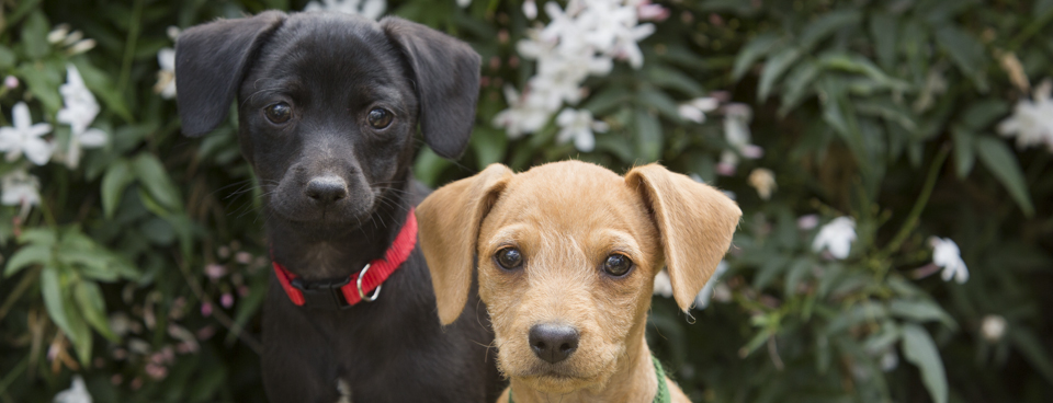 movie star puppies in need of adoption