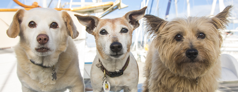 three dogs on a boat: what could possibly go wrong?