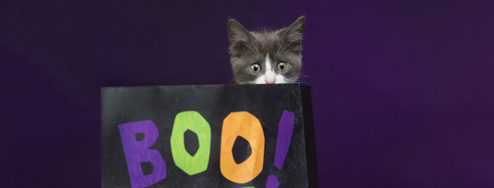 adorably scary halloween kittens