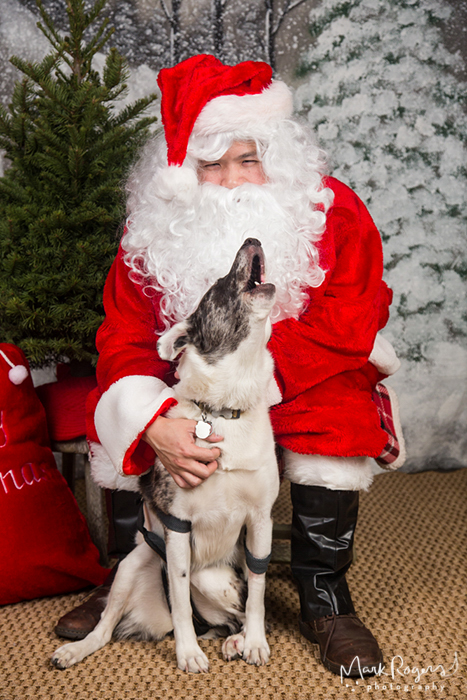 Santa with older dog howling