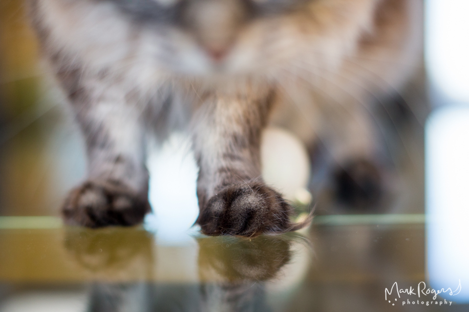 cat paws on glass table