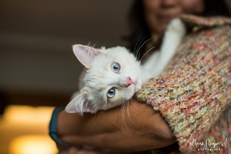 white kitten with blue eyes held by woman