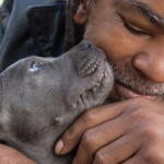 The year's best puppies and kittens
