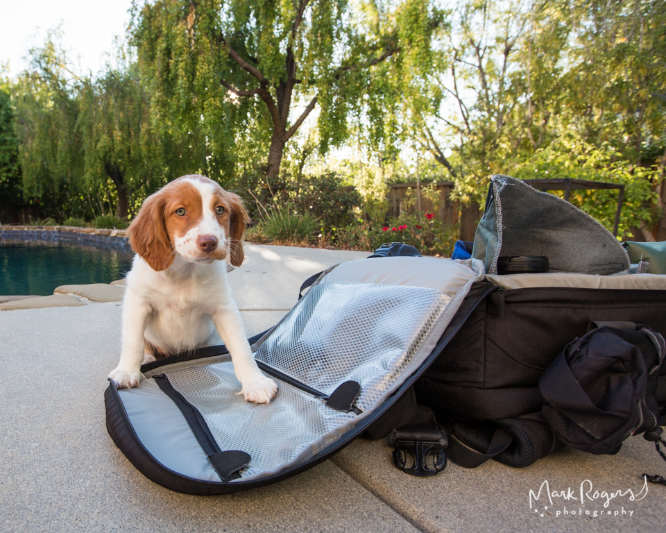 puppy sitting on camera bag
