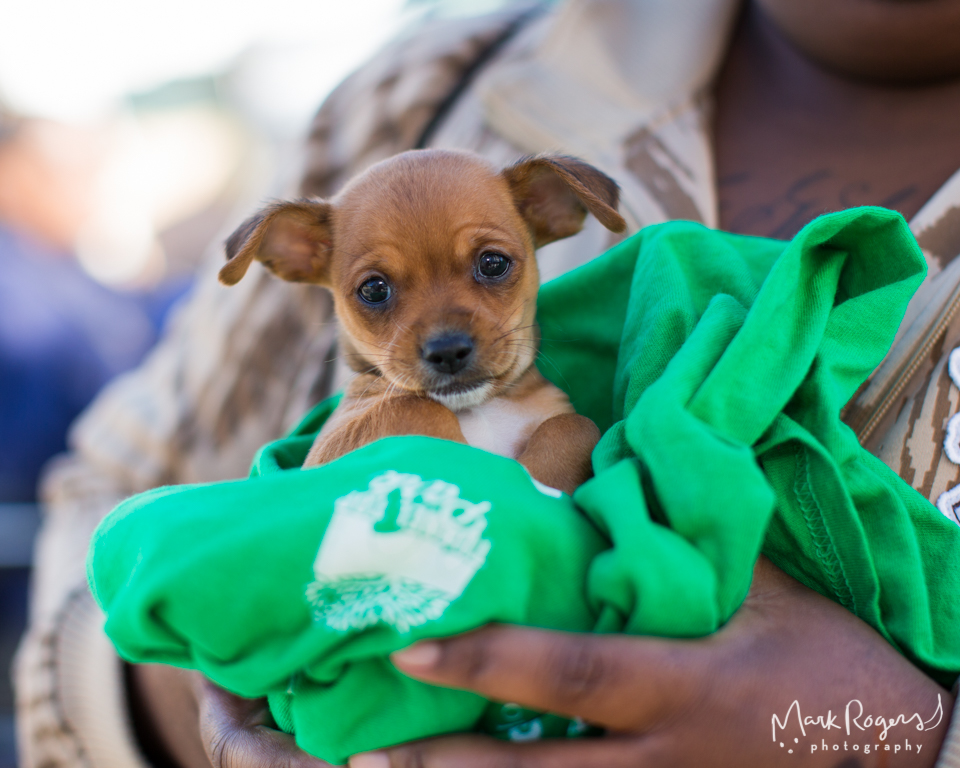 small brown puppy held in womans arms on green shirt