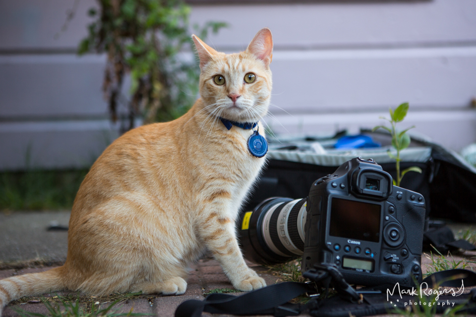 orange tabby cat next to camera