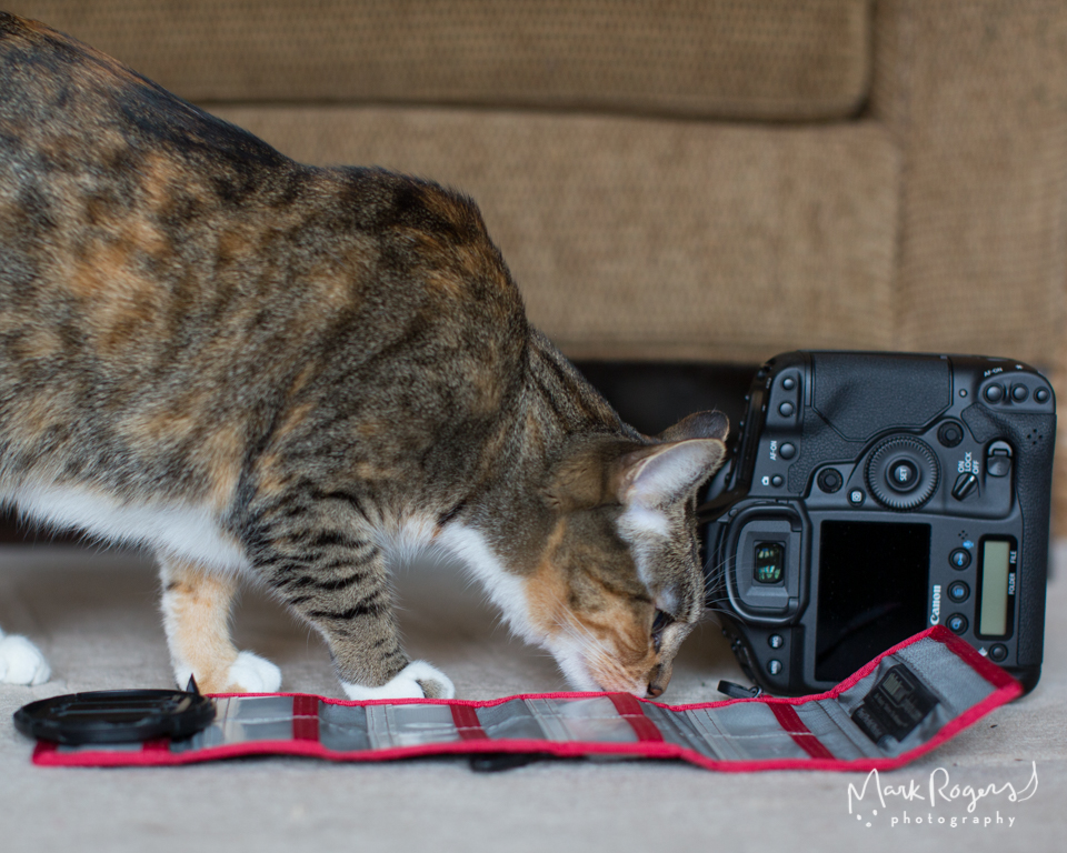 tabby cat smelling a canon digital camera