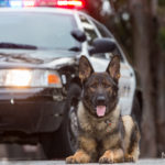Wash Your Dog and Help a Police K-9