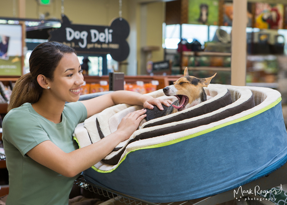 woman next to yawning dog in pet bed