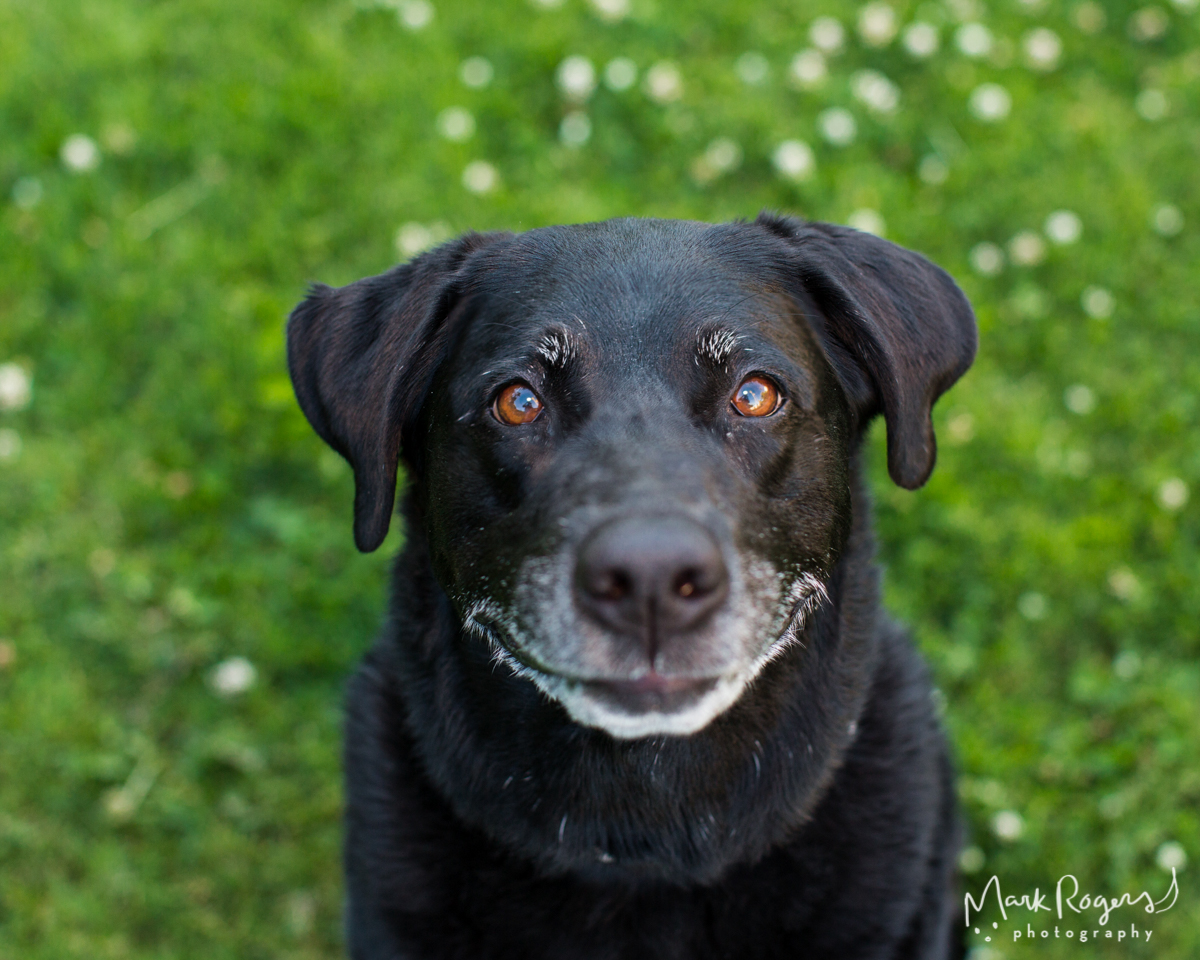 smiling-black-dog