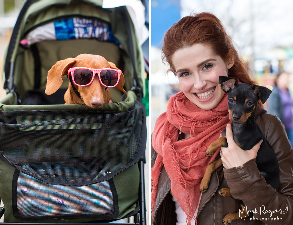 dachshund in sunglasses and woman holding puppy