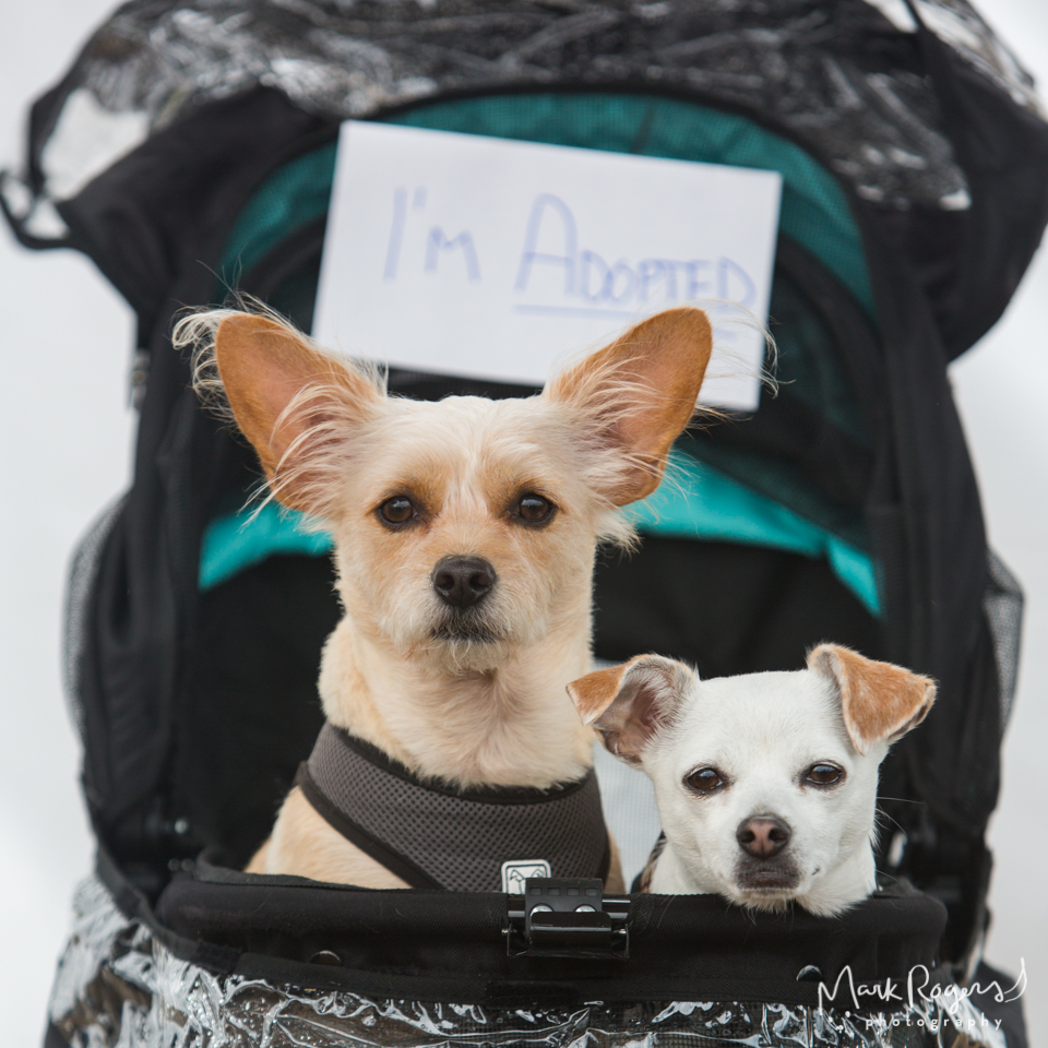 two adopted dogs in stroller