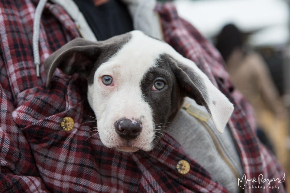 white and black puppy held against checkered shirt