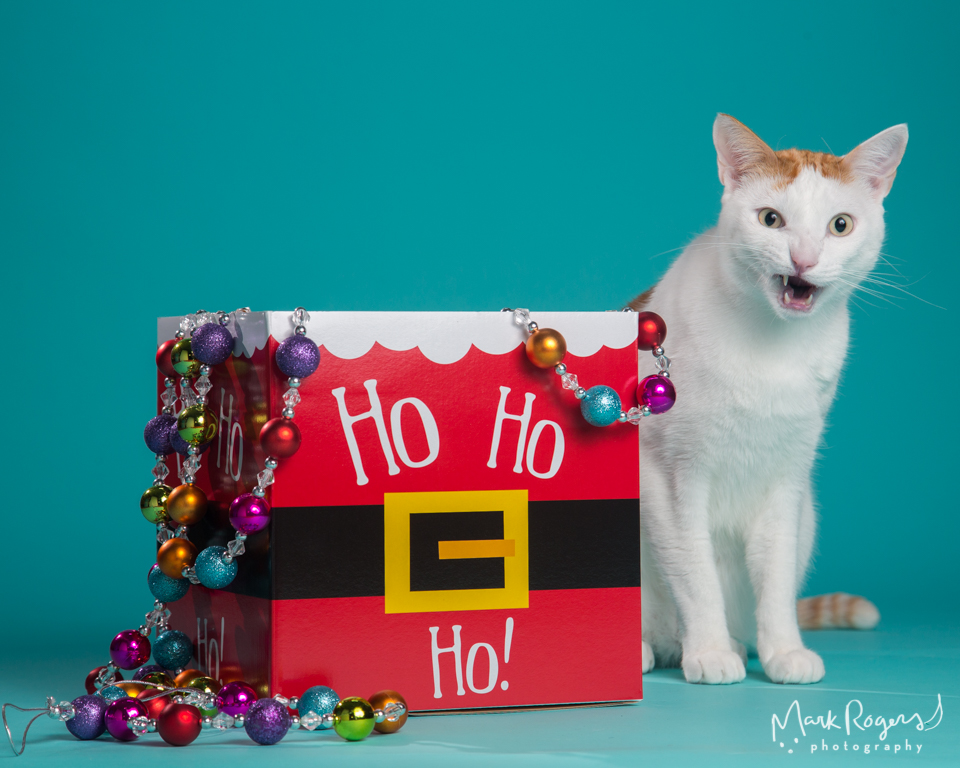 cat next to holiday box with funny expression