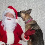 Top Ten Pet Holiday Photo Outtakes and Bloopers