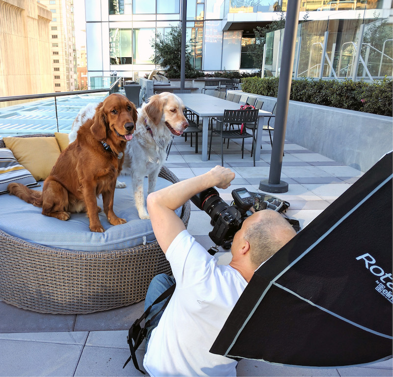 mark rogers photographing two golden retrievers