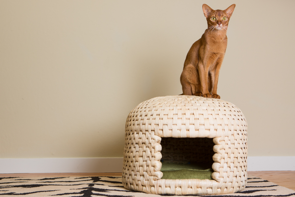 Abyssinian Cat on Neko Chagura Woven Cat House