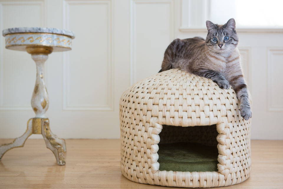 Tabby cat on cat hut