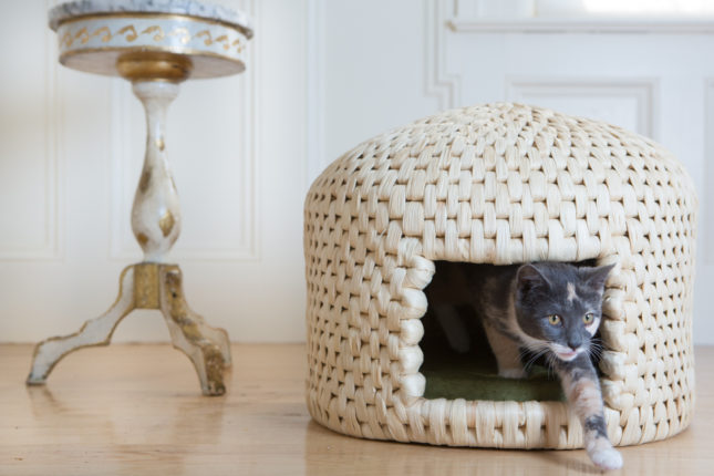 That Time I Photographed Cat Houses