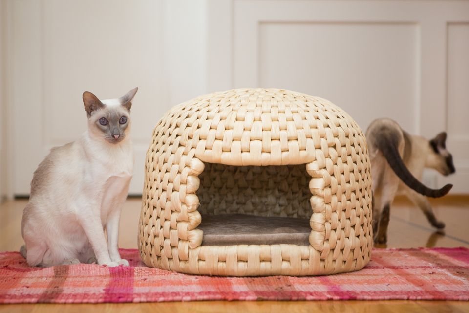 Siamese cats next to straw cat habitat
