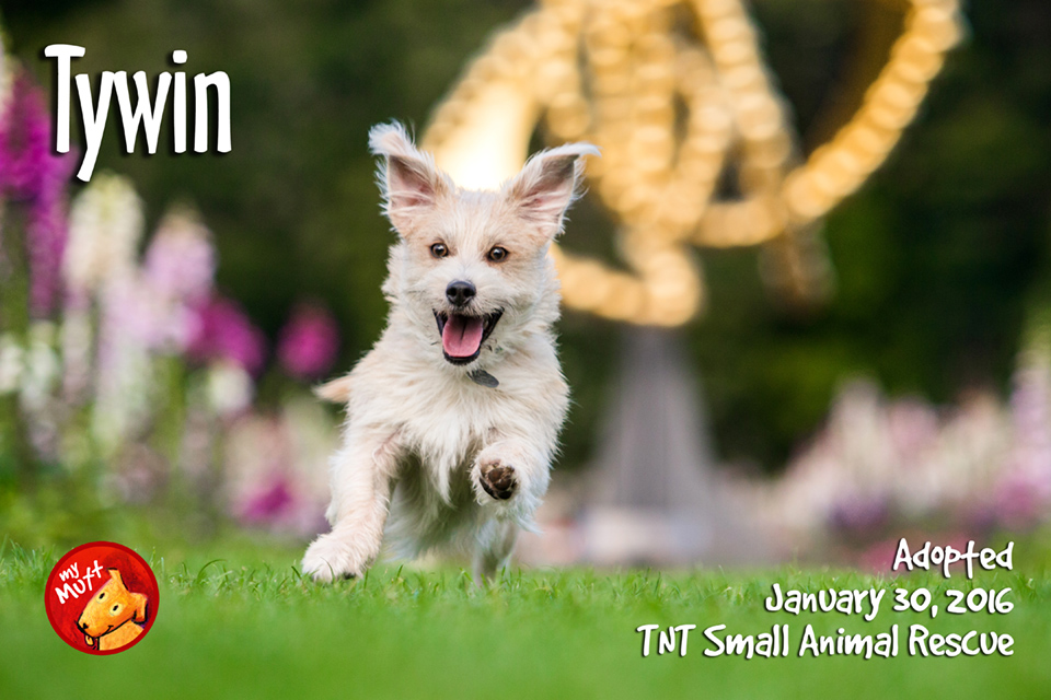 My Mutt poster of smiling running terrier by mark rogers