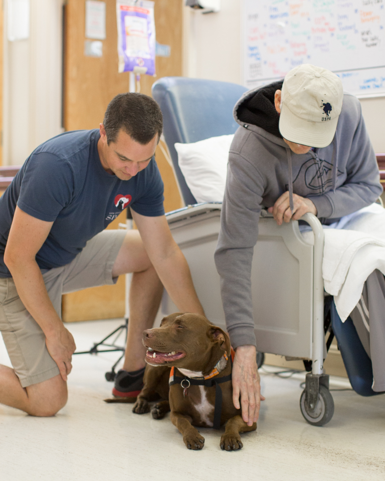 Therapy dog with handler and patient