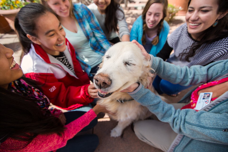 golden retriever therapy dog with students