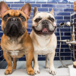 Dogs Steal the Show at SF Design Showcase