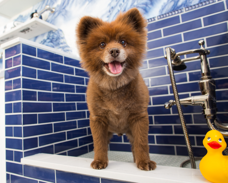 smiling dog in luxury bathroom