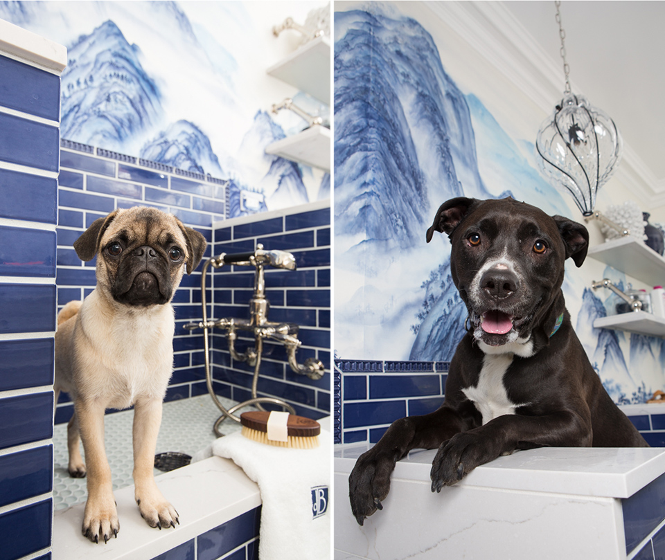 dogs in beautiful interior at designer showcase