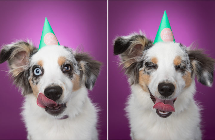 Happiness is a Photo Shoot for a Pet Bakery