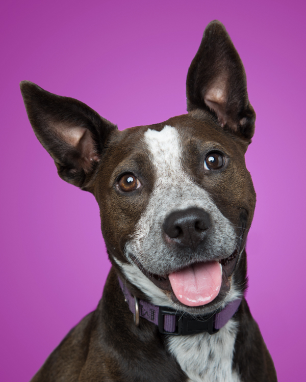 smiling mixed breed dog against purple background