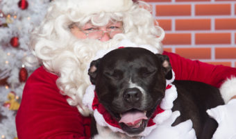 'Tis the Season for Pet Holiday Photos