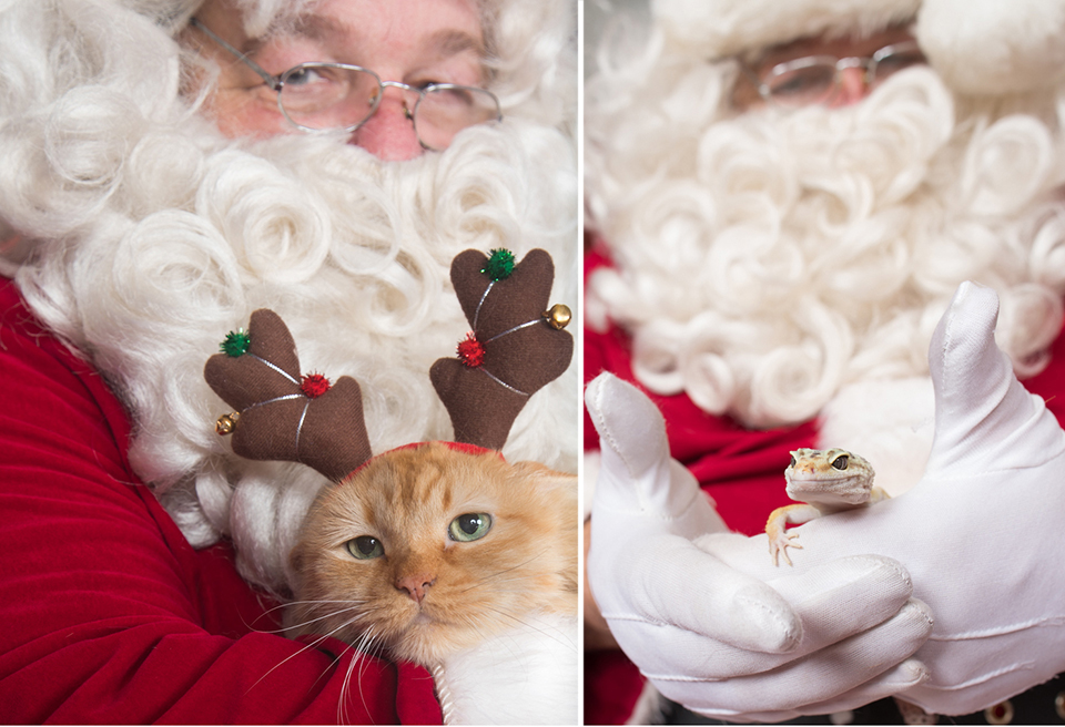 santa with orange cat with antlers and leopard gecko lizard