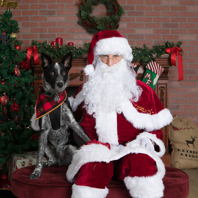 cattle dog next to santa with paw on leg